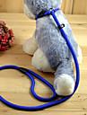 Katter Hundar Koppel Hundkoppel m. rem Justerbara/Infällbar Solid Röd Svart Blå naken Nylon