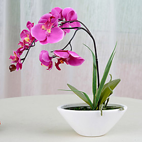 "12""H Modern Style Orchid in Ceramic Vase"