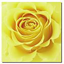 impresa lona de arte floral flor amarilla por Flowerphotos con marco de estirado