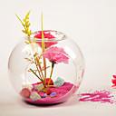 Hanging Air Plant Holder/Terrarium Vase