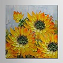 Mano óleo pintada pintura floral flor de Sun con el marco de estirado