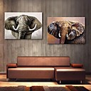 E-HOME Stretched Canvas Art Elephant Decoration Painting Set of 2