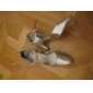 balsal moderna skor äkta läder dansskor praxis skor för kvinnor mer färger