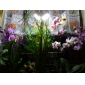 4W GX53 LED-spotlights 25 SMD 5050 300 lm Naturlig vit AC 220-240 V