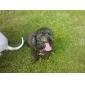 Câini Tricou Verde Îmbrăcăminte Câini Vara Literă & Număr Casul/Zilnic