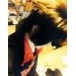 shippuden Sasuke Uchiha Cosplay Kostym