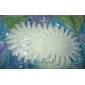 5pcs vit display&praxis verktyg 20-tip polish&uv gel färg visar kort