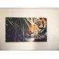 Stretched Canvas Art Landskap Animal kung av Forest Set av 5