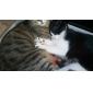 Chat Toilettage Santé Protège Ongle Animaux de Compagnie Accessoires de Toilettage Rouge Vert Bleu Rose Vert épinard